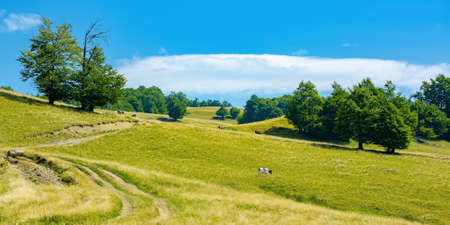 mountain landscape with pasture on a sunny day. beech trees on the hill. beautiful countryside rural scenery in summer Stock Photo