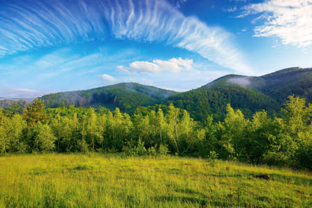 forest on the grassy meadow in the morning. beautiful countryside landscape in summertime. fog above the trees spreads from the distant mountains beneath a gorgeous sky with clouds Stock Photo