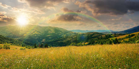 rural landscape with blooming grassy meadow at sunset. beautiful nature scenery of carpathian mountains in evening light. fluffy clouds on the blue sky