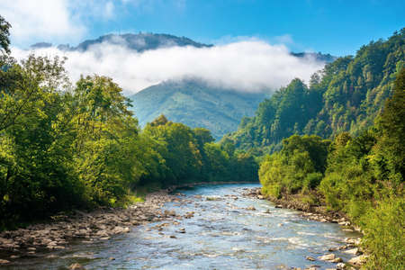 mountain river landscape in summer. wonderful nature scenery on foggy morning. clouds rolling over the distant hill. trees along the stream in the valley. sunny weather with blue sky