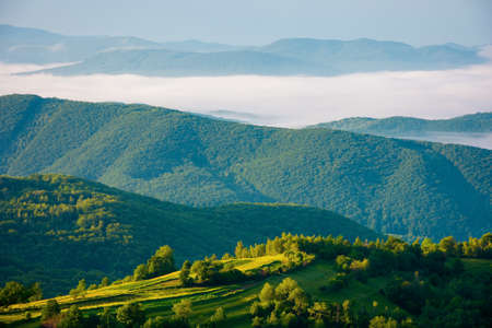 rural landscape in summer at sunrise. hills rolling in to the distant valley in morning mist. green countryside of transcarpathia