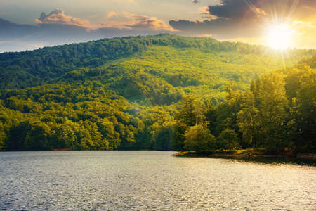 lake among beech forest in summer at sunset. beautiful nature landscape in mountains. vihorlat national park in evening light