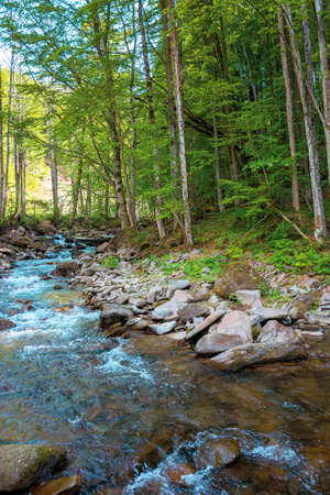 mountain stream runs through forest. spring nature scenery on a sunny day. rapid water flows among the rocks. beech trees on the shore in lush green foliage Stock Photo