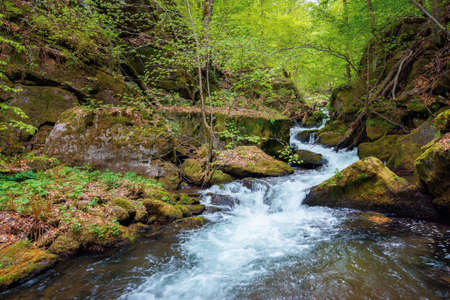 creek winding through rocks in the forest. rapid water flows among mossy boulders and beech trees. wonderful nature scenery in spring