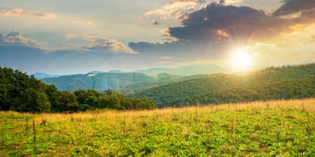 summer landscape of carpathian mountains at sunset. beautiful scenery in evening light. beech forest and grassy alpine meadows on the hills. clouds on the dramatic sky Stock Photo