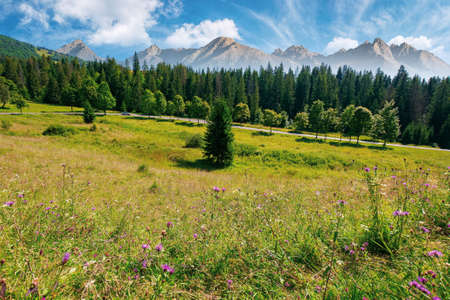 composite mountain landscape in summer. spruce forest down in the valley. high peaks of rocky tatra ridge in the distance. beautiful sunny day