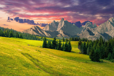 spruce trees in mountains at sunset. composite image with rocky peaks in the distance. summer countryside landscape with grass on the hills. cgi scenery in evening light with clouds on the sky