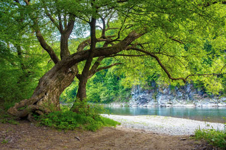 river flow under the rock. beautiful nature landscape in spring. deciduous trees on the shore Stock Photo