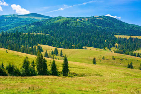 rural fields in mountainous countryside. trees on the grassy hills. summer landscape on a bright sunny day Stock Photo