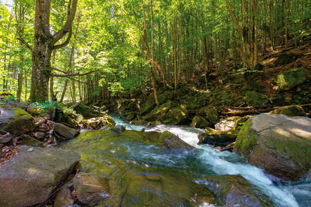 water stream in the beech forest. spring nature scenery on a sunny day. rapid creek flows among the rocks. trees on the rocky shore in lush green foliage