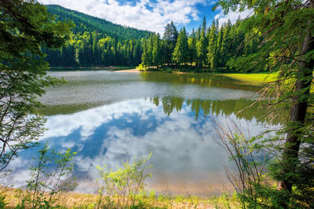 mountain lake in summer. forest reflecting on the water surface. wonderful nature scenery on a bright sunny day with fluffy clouds on the sky Stock Photo