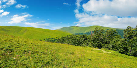 beech trees on the mountain meadow. great summit beneath a sky with clouds in the distance. beautiful summer scenery on a sunny day Stock Photo