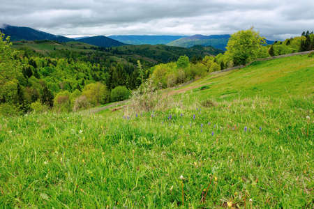 rural mountain landscape in spring. grass and trees on hills rolling through the green valley in to the distant ridge beneath a cloudy sky Stock Photo