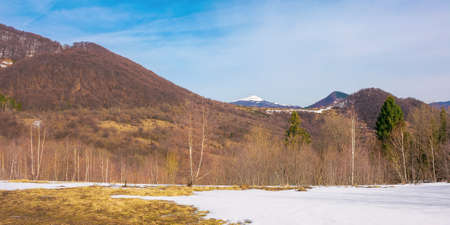 forest on snow covered meadow. beautiful mountain landscape with snow capped peak in the distance on a frosty sunny day