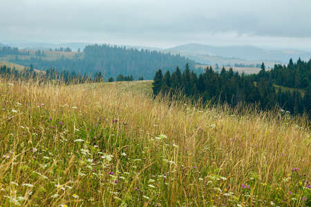 tall grass on the meadow. spruce forest on the hills. mountain landscape on a cloudy day in summer Stock Photo