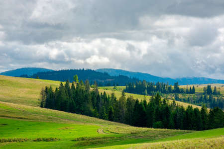 forest on the grassy meadow in mountains. stunning countryside scenery in early autumn dramatic weather. clouds on the sky. bright environment nature background