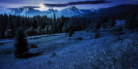 composite mountain landscape in summer at night. spruce forest down in the valley in full moon light. high peaks of rocky ridge in the distance