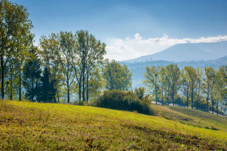 trees on the grassy hill. countryside mountain scenery in early autumn. wonderful nature landscape on a bright morning. village in the distant valley. travel back country concept Stock Photo