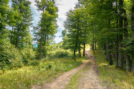 country road through beech forest. nature scenery in summer. dappled lite through foliage on the ground