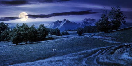 mountain landscape with pasture at night. beech trees on the hill in full moon light. beautiful countryside rural scenery in summer