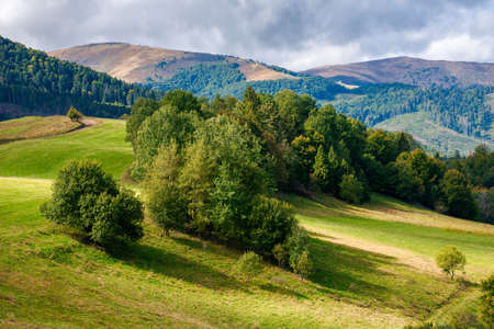 trees on the grassy hill. sunny countryside scenery in early autumn. beautiful landscape of carpathian mountains. dramatic sky and light at high noon