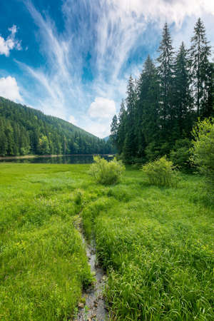 mountain summer landscape with lake. beautiful nature scenery of synevyr national park, ukraine. sunny weather with clouds on the sky. popular travel destination