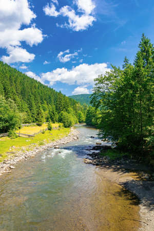 river in the valley of carpathian mountains. beautiful countryside scenery. rural fields on the shore. bright blue sky with fluffy clouds