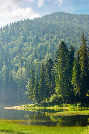 mountain lake among the forest in morning light. wonderful summer nature scenery with coniferous trees on the shore reflecting in the water. synevyr national park of carpathian mountains, ukraine Stock Photo
