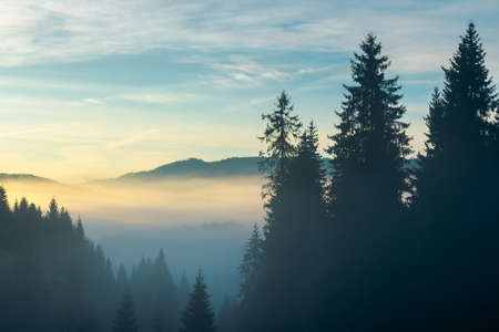 rural valley on foggy sunrise. wonderful nature scenery of forested apuseni mountains, romania. wonderful weather with glowing clouds on the sky Stock Photo
