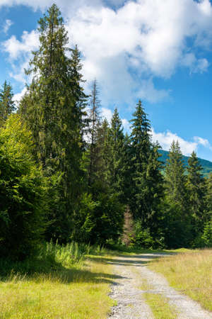 old country road through forest. grass along the path. sunny summer landscape in mountainous countryside