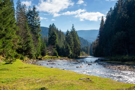 landscape with river in mountains. nature scenery with spruce trees on the grassy shore. stones in the water stream running through the alpine valley on a sunny autumn day Stock Photo