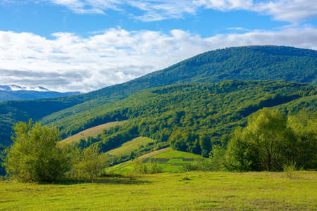 countryside scenery in morning light. beautiful mountain landscape. trees on the hill. clouds on the sky. early autumn weather Stock Photo