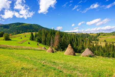 rural landscape with haystacks on the hill. fields and meadows in mountains. wonderful carpathian countryside scenery on a bright september day. clouds on the sky Stock Photo