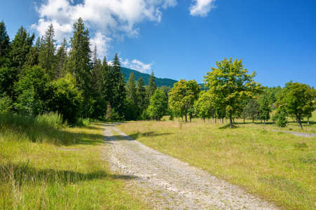 old country road through mountainous countryside. beautiful summer landscape. spruce trees along the way. bright sunny weather. travel backcountry concept Stock Photo