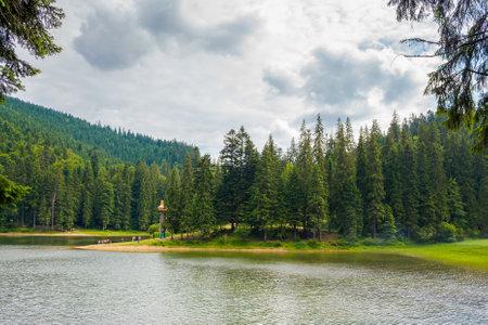 synevir lake of carpathian mountains national park. wonderful summer nature scenery on a sunny day. popular travel destination of transcarpathia, ukraine. fluffy clouds on the sky