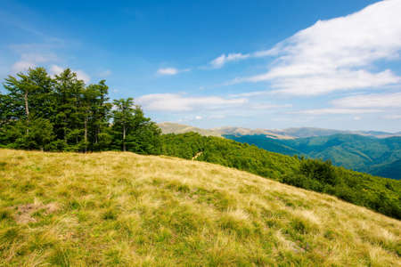 trees on the hillside meadow. beautiful mountain landscape in summer afternoon. clouds on the sky Stock Photo