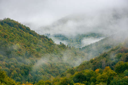 fog rising above the forest. moody nature background with cloudy sky. cold mist in the valley of carpathian countryside in early autumn. deciduous trees on steep hills. mysterious mountain landscape Stock Photo