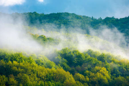 mountain landscape on a misty morning. beautiful nature background in summer. scenic outdoor scenery with clouds. magic weather season