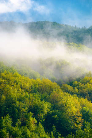 mountain landscape on a foggy morning. beautiful nature background in spring. scenic outdoor scenery with clouds. magic weather season