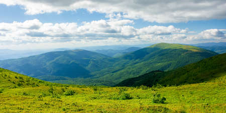 view from runa mountain. grassy hills and slopes in evening light. summer landscape of carpathian mountains. bieszczady and vihorlat ridge in the distance beneath a sky fluffy clouds