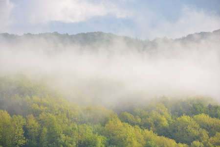 forest in the morning fog. beautiful nature scenery in spring. green nature background on a sunny weather