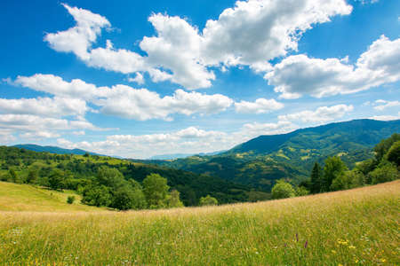 carpathian rural landscape in mountains. grass and herbs on the meadow, trees on the hills rolling down in to the valley. beautiful summer nature scenery on a sunny day with fluffy clouds on the sky Stock Photo