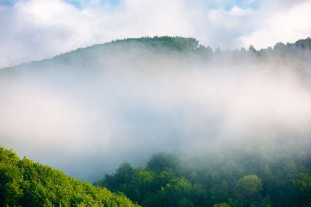 fog on the hill in the morning. beautiful nature background in summer. scenic outdoor scenery on a sunny weather