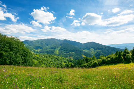 grassy meadow in mountains. wonderful nature landscape. sunny summer day. clouds on the sky