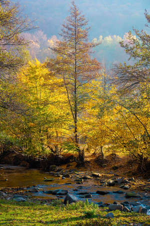 autumnal nature scenery with river. trees in colorful foliage on the grassy shore. beautiful landscape in morning light