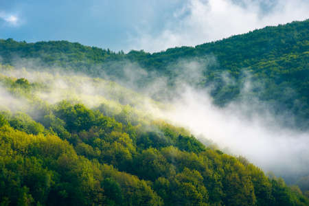 morning mist on the hill. beautiful nature scenery in spring. scenic nature scenery on a sunny weather Stock Photo