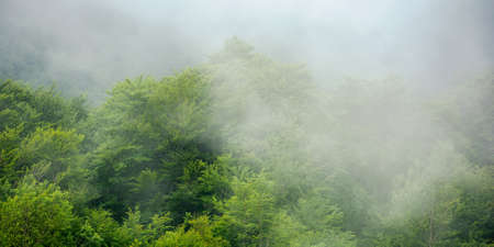 clouds rise above the forest. high volume humidity weather. foggy atmosphere. mysterious nature background in the morning Stock Photo