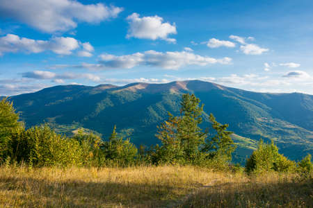 mountainous countryside landscape in autumn. trees on the meadow in evening light. view in to the distant ridge. wonderful nature scenery of transcarpathia. clouds above polonina krasna range