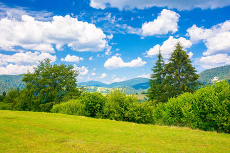 countryside summer landscape in mountains. trees on the grassy meadow. rural fields on the distant hills. sunny scenery with fluffy clouds on the blue sky