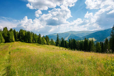 carpathian mountain rural landscape in summer. forest on the grassy meadow. fields and pastures on the distant hills. sunny scenery with fluffy clouds on the blue sky in afternoon light Stock Photo